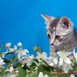 Kitten sits in flowers — Stock Photo