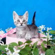 Kitten in a box in flowers — Stock Photo #15699781
