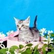 Kitten in a box in flowers — Stock Photo