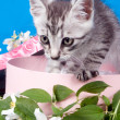 Kitten in a box in flowers — Stock Photo #15699833