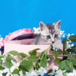Kitten in a box in flowers — Stock Photo #15699851