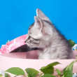 Stock Photo: Kitten in a box in flowers