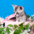Kitten in a box in flowers — Stock Photo #15699873