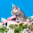 Kitten in a box in flowers — Stock Photo #15699901