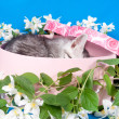 Kitten in a box in flowers — Stock Photo #15699917
