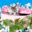 Kitten in a box in flowers — Stock Photo #15699937