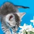 Kitten sits in flowers — Stock Photo #15699985