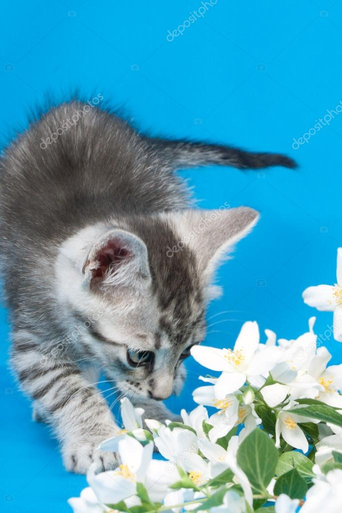 Kitten sits in flowers of a jasmine — Stock Photo #15699985