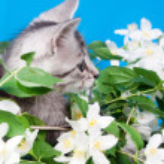 Kitten sits in flowers — Stock Photo #15700005