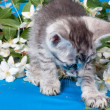 Stock Photo: Kitten sits in flowers