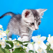 Kitten sits in flowers — Stock Photo #15700035