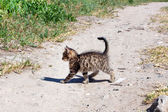 Small kitten is on the road — Stock Photo