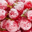 Frozen red currant berries. — Stock Photo