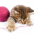 Tabby kitten playing with a ball of yarn — Stock Photo
