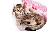 Bir kutu içinde oynayan küçük tabby yavru kedi — Stok fotoğraf