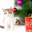 Kitten and Christmas decorations — Stock Photo #36331375
