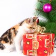 Kitten and Christmas decorations — Stock Photo #36331421