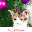 Kitten with a bulletin board and Christmas text — Stock Photo #36719999