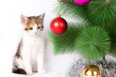 Котенок и рождественские украшения — Стоковое фото