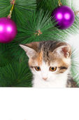 Kitten with a bulletin board on Christmas decorations — Stock Photo