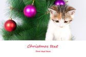 Kitten with a bulletin board and Christmas text — Stockfoto