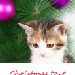 Stock Photo: Kitten with a bulletin board and Christmas text