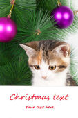 Kitten with a bulletin board and Christmas text — Stock Photo