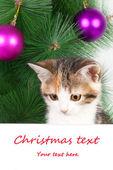 Gatinho com um quadro de avisos e texto de Natal — Fotografia Stock