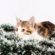 Christmas spotted  kitten and tinsel — Stock Photo
