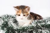 Weihnachten gefleckte kätzchen und lametta — Stockfoto