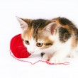 Kitten playing with a ball of yarn — Stock Photo