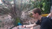 Having fun while feeding various birds from my hands in Kuala Lumpur national bird park in Malaysia. — Stock Photo