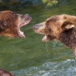 Stock Photo: Brown Bears Fighting in Water