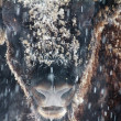 Close-up portrait of wild bison in winter — Stock Photo