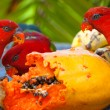 Rainbow lorikeets in a manger requests food. Mango. - Stock Photo