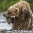Bear cub — Stock Photo #24604873