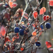 Stock Video: Autumn, tundra, berries