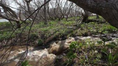 Högvatten, töar snön, våren — Stockvideo