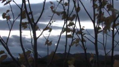 Foglie gialle che cade dall'albero in autunno — Video Stock