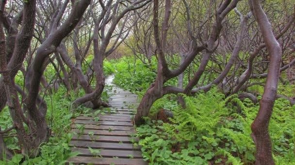 Verde hierba, árbol, primavera — Vídeo de stock