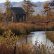 Stock Video: Autumn, yellow leaves, tundra
