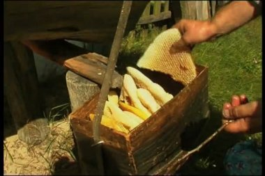 Beekeeper working in his apiary — Stock Video