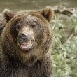 The brown bear fishes — Stock Photo #25071909