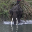 Stock Video: Asielephant. Nepal.