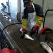 Stock Video: Salmon, craft