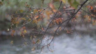 Folhas verdes. o rio. — Vídeo Stock