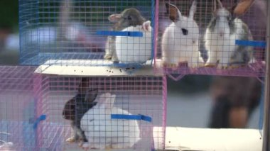 Hare in a cage. — Stock Video