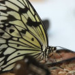 Butterfly close up — Stock Video