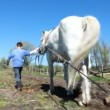 Stock Video: Ploughing the Field with Horses