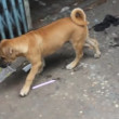 Stock Video: Stray dog